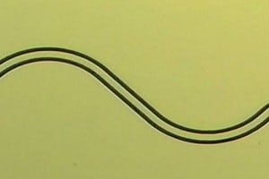 Spin Quantum Electrodynamics